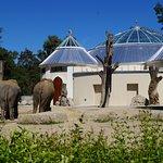 Das Elefantenhaus wird derzeit umgebaut und eröffnet im Oktober 2016 neu