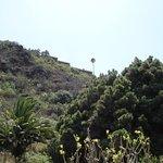 Foto de Jardín Botánico Canario