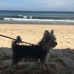 my dog on beach