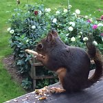 Our Friendly Squirrel enjoying our deck.