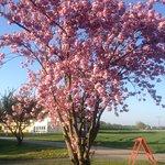 dieser schöne Baum steht im Hof