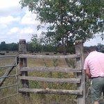 Ouverture clôture des taureaux