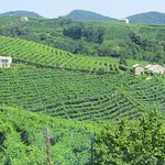 Vineyards on the Prosecco Road