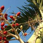 Foto de Blau Costa Verde Beach Resort