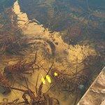 Le bassin dans lequel séjournent les Lobster