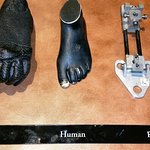 Human Evolution?
