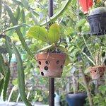 Photo of Botanic Garden Homestay