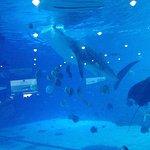 Georgia Aquarium Foto