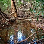 Photo de Thala Beach Nature Reserve