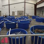 Open bay with all the tubs to view the different turtles