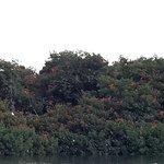 Photo de Caroni Bird Sanctuary