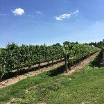 Photo de Peller Estates Winery Restaurant