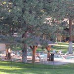 BEST WESTERN Ponderosa Lodge Foto