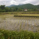 Rice fields just beyond the gate of Mae Nai