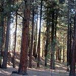 Day Use Area, La Pine State Park, Le Pine, Oregon