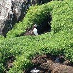 Skellig Islands NQ