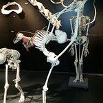 KULTURAMA Museum des Menschen Foto