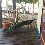 Photo of Zambezi