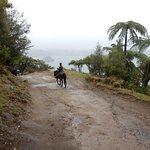 Horse Trekking Lake Okareka Foto