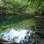 one of the many cenotes you can visit, this one is hidden away at xcacel beach.