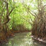 Tangalle Lagoon Foto