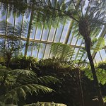 Botanischer Garten und Botanisches Museum Berlin-Dahlem Foto