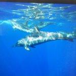 Nuotato con i delfini ma liberi non in cattività