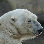 Eisbärmama - wir standen vor diesem Gehege sehr lange da Mama und kind spielten ;-)
