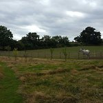 Oak Tree Farm Bed & Breakfast