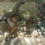 Photo de Reserve Africaine de Sigean