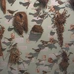 The bird display at the museum was comprehensive, regional birds & their unique nests - fascinat