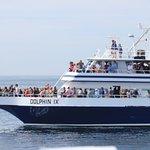Photo de Dolphin Fleet Whale Watch