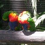 Jardin Botanique de Deshaies Foto
