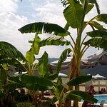Foto Athos Hotel