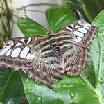 Foto de Key West Butterfly and Nature Conservatory