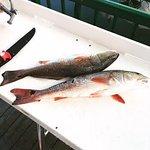 Keeper Redfish