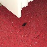 insecte cheminant gentiment pres de la salle de bain