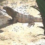 Parque Nacional Manuel Antonio Foto