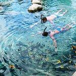 Swim-thru Aquarium