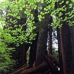 Jedediah Smith Redwoods State Park Foto