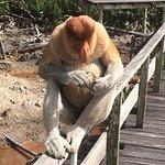 Up close with a proboscis monkey