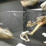 """Foto de Museo di Scienze Naturali """"E. Caffi"""""""