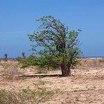 Tourbilder von Baobab
