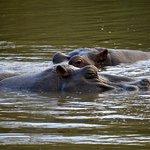 Photo de Kruger Park Lodge