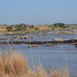 Wildebeest crossing the Mara River-2