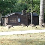 Canadian Geese outside one morning. (We did not hear them at all)