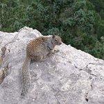 Local Sandia Peak Resident