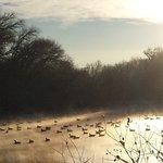 Lake View Geese