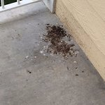 Wasp debris there all week