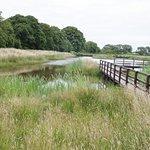RSPB Campfield Marsh Nature Reserve